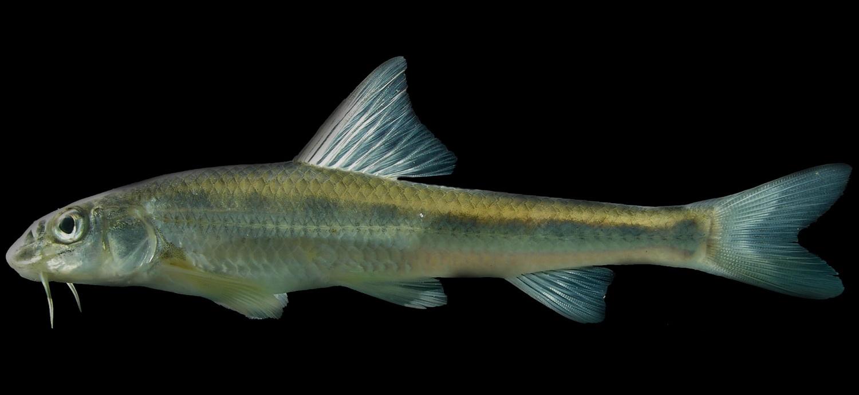 Ловля пескаря на Ахтубе — особенности рыбалки на Ахтубе: как и на что ловить пескаря